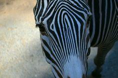 Zoo Palmyre