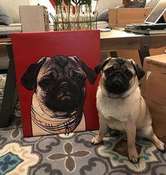 My dad got a in the Christmas Gift Department!!! My looks PHENOMENAL!! In fact, It's so surreal I am terrified of it. ♥️ . . . #govtwatchdog #senatorsanchi #popyourpup #pugsta #pugstagram #pugsofdc #pugsofinsta #pug #pugs #puggo #puggy