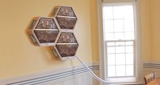 Indoor 3 hives.jpg