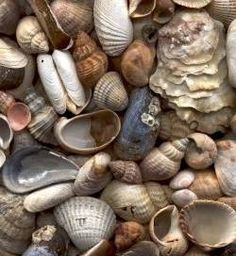 How to Make Shell Beads