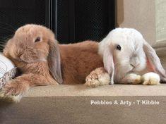 Rabbit care advice – Best 4 bunny