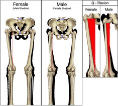 anatomy difference between male and female human skeleton