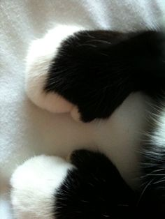 Cats leave paw prints on your heart. Note the thumbs. Pretty Cats, Beautiful Cats, Crazy Cat Lady, Crazy Cats, Cat Paws, Dog Cat, Kittens Cutest, Cats And Kittens, Ragdoll Kittens