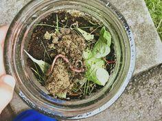 Neulich haben wir in unserem Garten ein Blumenbeet angelegt. Beim Erde ausheben haben wir unzählige Regenwürmer entdeckt und die haben bei den Kindern reges Interesse hervorgerufen. Am liebsten hätten sie sie in ihrem Holzkipper durchs Wohnzimmer chauffiert. Das brachte mich auf die Idee die netten