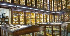 "Apertura serale Museo di Zoologia ""P. Doderlein"" #ndm14 #ndm14italia #palermo"