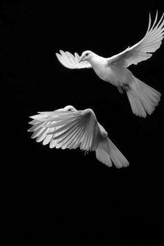 Mekan ile zamanı aşacak insan. Bu kanatlanış, birleşmenin, birlikte düşünmenin eseri olacak. Birlikte düşünmek kişiliği ortadan kaldırmaz, geliştirir. Ama düşüncelerini başkalarınınkilerle birleştirmek için, onları sevmek , onlarla kaynaşmak gerek.  Kurtuluş bu şuurlanışta.  Düşünen insanlığı hayata bağlayacak olan, maddi bir rahat değil, kendi kendini aşma , BÜTÜNLEŞMEDİR ....  Cemil Meriç / Umrandan Uygarlığa