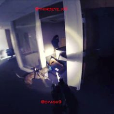 """Low light/no light drills with a young Malinois and Dutch Shepherds Dog. Working dogs must be socialized to all tools, high powered flashlights are no exception. Predators have the tendency to """"freeze and stare"""" when the flashlights come on.  Training consucted under the instruction of @thirdeye_k9.  #dontbeadeerintheheadlights #dyask9 #thirdeyek9 #itsnotagame #nosports #noprops #workingdog #k9 #malinois #dutchshepherd #SLPD #slc #igmilitia #ar15 #gun #dog #gunporn #baltimore #roits #police…"""