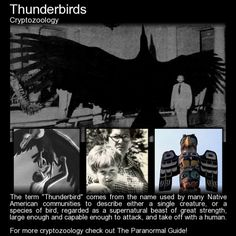 Thunderbirds - Cryptozoology - In the summer of 1977, in the state of Illinois, a young boy and several other witnesses would report a strange and terrifying story. A ten year old boy by the name of Marlon Lowe, on the night of July 25th, in the small community of Lawndale,would tell authorities that while playing with two other boys outside of his home a massive black bird, one of two that appeared, had chased and grabbed him by his tanktop and pulled him two feet in the air, carryin...