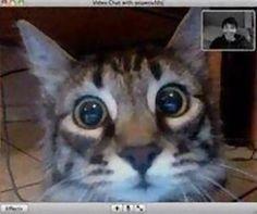 ビデオチャットで猫が自分を認識してくれた04