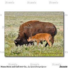 Mama Bison and Calf 2017 Calendar Postcard