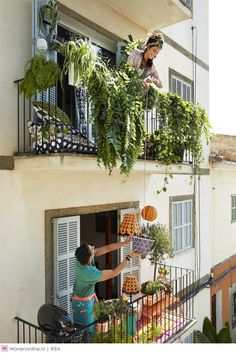 11 Privacy Fencing Ideas Make Your Garden Or Balcony Private And Hidden From View Of Neighbors