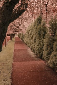 Poppin da Infrared Cherry by Andrew Cameron on 500px