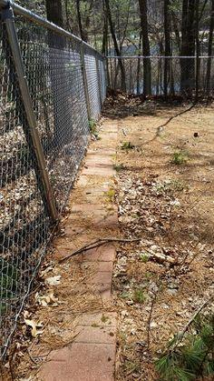 Dog digging prevention: brick pavers