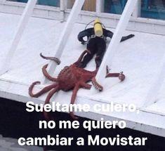 Best Memes, Dankest Memes, Funny Memes, Jokes, Spanish Memes, Cute Funny Animals, Stickers, Reaction Pictures, Cringe
