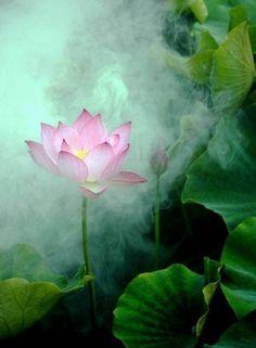 人的一生,注定要经历很多。路上,可能有朗朗的笑声;路上,可能有委屈的泪水;路上,懵懂的坚持着;路上,茫然的取舍着;路上,有成功的自信;路上,有失败的警醒,每一段经历注定珍贵。生命的丰盈缘于我们心的慈悲,生活的美好缘于拥有一颗平常心。人生路不必雕琢,只要踏踏实实做事,简简单单做人。