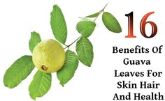 16 Benefits Of Guava Leaves For Skin Hair And Health