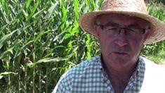 La invasión de las semillas transgénicas (con Josep Pàmies)