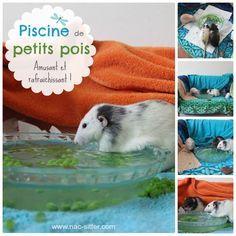 Comment faire une piscine de petits pois pour rats