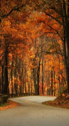 Forest road - by Vendenis Cool Photos, Beautiful Pictures, Holiday Wallpaper, Forest Road, Flamboyant, Seasons Of The Year, Fall Pictures, Fall Season, Natural World