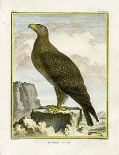""" Le Grand Eagle "", 1766. Copper engraving, Antique Hand Colored Print, Buffon Natural History. Measures 10 x 8 inches. 27 x 22 cm."