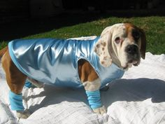Dog jackets with matching leg warmers for your pooch from Stylish Paws! Email stacey@stylishpaws.co.za
