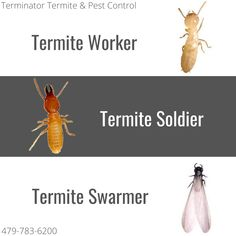 Termites Can Enter Through More Than Just Wood - Terminator Termite & Pest Control Termite Pest Control, How To Level Ground, Canning, Wood, Woodwind Instrument, Home Canning, Trees, Home Decor Trees
