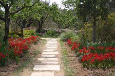 El Blog de La Tabla: Jardín de lirios y rosas en Benissa, Alicante.