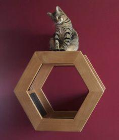 Habicat Cat Wall Climber