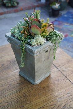 Succulent container by Simply Succulent https://www.facebook.com/pages/Simply-Succulent/222665291108990