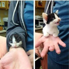 Magicians starter kitten kit. dispose after one month and replace.