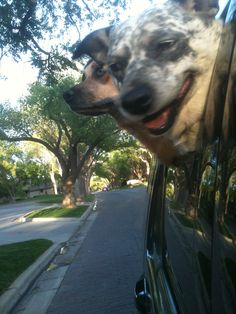 Roxy and Dottie going for a ride