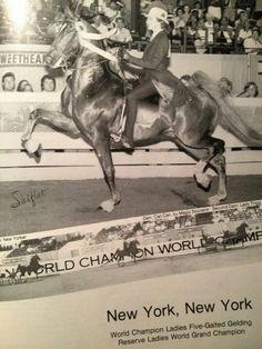 . American Saddlebred, Vintage Horse, Moose Art, Ads, Horses, Animals, Beautiful, Animales, Animaux