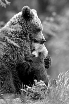♥Bear Hug♥