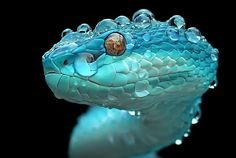 Tagged with cakeday, snake, cake day, viper, not your average daww; Almost forgot my cake day. All I have to share is this pic of a beautiful white lipped island pit viper. Reptiles Et Amphibiens, Cute Reptiles, Animals And Pets, Funny Animals, Cute Animals, Strange Animals, Beautiful Creatures, Animals Beautiful, Beaux Serpents