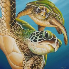 We all know and love the Galapagos Tortoise, they are cute and different but oddly misunderstood creatures, this article will show you some of the interesting. Sea Turtle Painting, Sea Turtle Art, Turtle Love, Sea Turtles, Baby Turtles, Belly Painting, Polychromos, Sea Art, Ocean Creatures