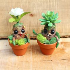 Summer Harvest Baby Orphan Mandrakes