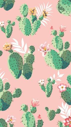 Pink and green cactus iphone wallpaper. Pink and green cactus iphone wallpaper. Cactus Backgrounds, Cute Backgrounds, Cute Wallpapers, Wallpaper Backgrounds, Phone Wallpapers, Wallpaper Quotes, Cactus Rose, Green Cactus, Cactus Cactus