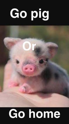 Animals 🙈 - Animals, animals wild, animals funny, animals cutest, animals and pets Cute Baby Pigs, Cute Piglets, Baby Animals Super Cute, Cute Little Animals, Cute Funny Animals, Cute Babies, Tiny Baby Animals, Newborn Animals, Baby Piglets