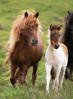 Horses beautiful mane