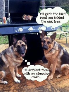 Does your german shepherds to this as well? #GSD