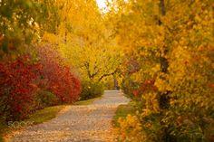 Colorful path by Andre_Villeneuve
