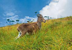 The Delights Of Trekking Through Kerala's Neyyar Wildlife Sanctuary