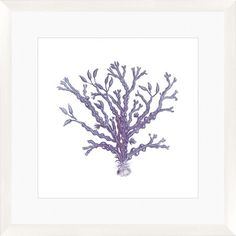 Blue Coral Framed Giclee Print I at Joss & Main