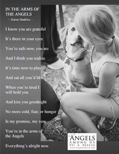 Adopt and give them a home! Help save or make a difference in an animals life! Angels Among Us Rescue Rescue Dogs, Animal Rescue, I Love Dogs, Puppy Love, Angels Among Us, Dog Rules, Pet Loss, All Gods Creatures, Animal Quotes