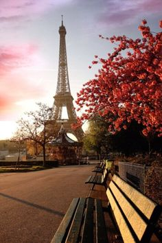 Paris Eiffel Tower and cherry blossoms I'm in heaven