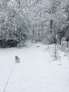 Walking my cute little pug named muffin in this beautiful winter wonderland!