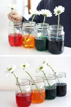 Fun color changing flower science and STEM for kids! Easy Spring science with color changing flowers is a bit of magic and natural science! Science Activities For Toddlers, School Age Activities, Science Experiments For Preschoolers, Preschool Science, Preschool Crafts, Summer Activities, Fall Preschool, Teaching Science, Classroom Activities
