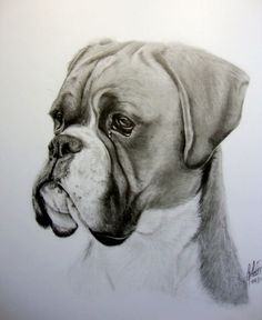"11x14"" pencil, custom dog portrait FOLLOW ME ON FACEBOOK! www.facebook.com/WildlifeAndAr… Another one for a Christmas present! Thanks for looking, I hope you enjoy!"