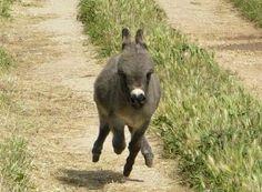 run lil donkey, run