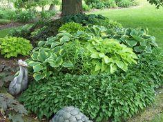 Design Ideas for Hosta Gardens - Favorite Perennials Hosta Plants, Shade Plants, Backyard Garden Landscape, Backyard Landscaping, Large Backyard, Flower Bed Designs, Hosta Varieties, Hosta Gardens, Tropical Garden